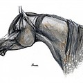 The Grey Arabian Horse 11 by Angel  Tarantella