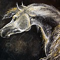 The Grey Arabian Horse 9 by Angel Ciesniarska