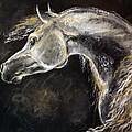 The Grey Arabian Horse 9 by Angel  Tarantella