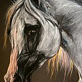 The Grey Arabian Horse by Angel Ciesniarska