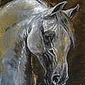 The Grey Arabian Horse Oil Painting by Angel Ciesniarska