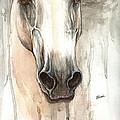 The Grey Horse Portrait 2014 02 10 by Angel Ciesniarska