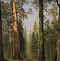 The Grizzly Giant Sequoia Mariposa Grove California by Albert Bierstadt