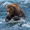 The Grizzly Plunge by Joan Wallner