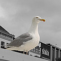 The Gull by Steve K