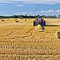 The Harvest by Keith Armstrong
