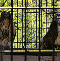 The Hawks From The Series The Imprint Of Man In Nature by Verana Stark