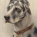 The Head Of A Doberman by Wilhelm Schwar
