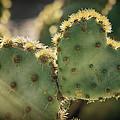 The Heart Of A Cactus  by Saija  Lehtonen