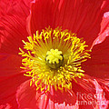The Heart Of A Red Poppy by Geraldine Cote