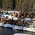 The Herd by Stephanie  Bland