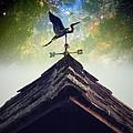 The Heron Vane by Anne Thurston