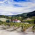 The Hills Of Tuscany by Monika Degan