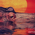The Hippo by Angela Doelling AD DESIGN Photo and PhotoArt