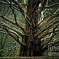 The Hobbit Tree by Mary  Smyth