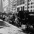 The Horse And Buggy Lineup by Christy Gendalia