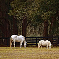 The Horse And The Pony - Standard Size by Mary Machare