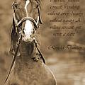 The Horse by Daniel Csoka