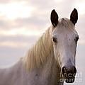 The Horse In The Setting Sun by Angel Ciesniarska