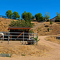 The Horse Ranch 2 by Richard J Cassato