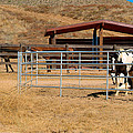 The Horse Ranch 3 by Richard J Cassato