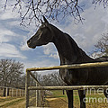 The Horse Trainer by Doug Farrell