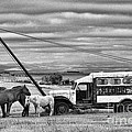 The Horses And The Welding Truck by David Arment
