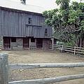 The Horses Are Out Of The Barn by Gerald Schaffer