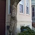 The Human Tree by Lois Ivancin Tavaf