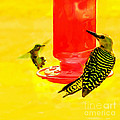 The Humming Bird And Gila Woodpecker by Bob and Nadine Johnston