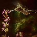 The Hummingbird Digital Art by Ernie Echols