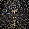 The Hunter And Its Pray - A Gold Fly Caught By A Gold Spider by Serge Averbukh