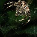 The Hunter by Jaroslaw Blaminsky