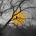 The Hunters Moon And The Barred Owl by Kathy Barney