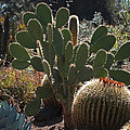 The Huntington Desert Garden by Rona Black