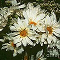 The Infinite Shades Of White by RC DeWinter