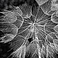 The Inner Weed Monochrome by Steve Harrington