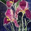 The Iris Melody by Sherry Harradence