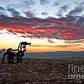 The Iron Horse Early Dawn The Iron Horse Collection Art by Reid Callaway