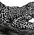 The Jaguar  by Paul Sutcliffe