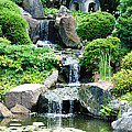 The Japanese Garden by Bill Cannon