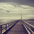 The Jetty by Linda Lees