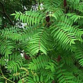 The Jutting Sumac Canopy Hungers For Light by Terrance DePietro