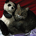 The King Kitty And Panda 01 by Ausra Huntington nee Paulauskaite