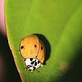 The Lady Bug by Matt Faris