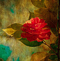 The Lady Of The Camellias by Loriental Photography
