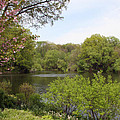 The Lake Central Park Nyc by Christiane Schulze Art And Photography