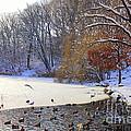 The Lake In Winter by Dora Sofia Caputo Photographic Design and Fine Art