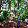 The Lamp Post by Shari Nees