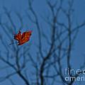 The Last Leaf Fell by Douglas Stucky